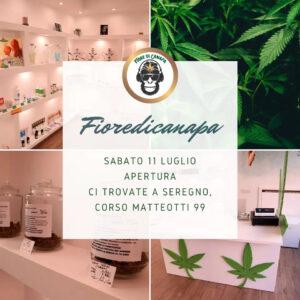 Prodotti in cannabis  Lodi